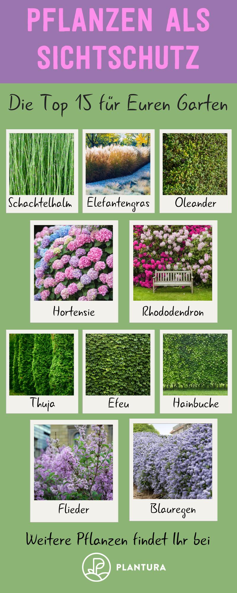 Pflanzen als Sichtschutz: Unsere Top 15 für Garten & Balkon #gartenideen