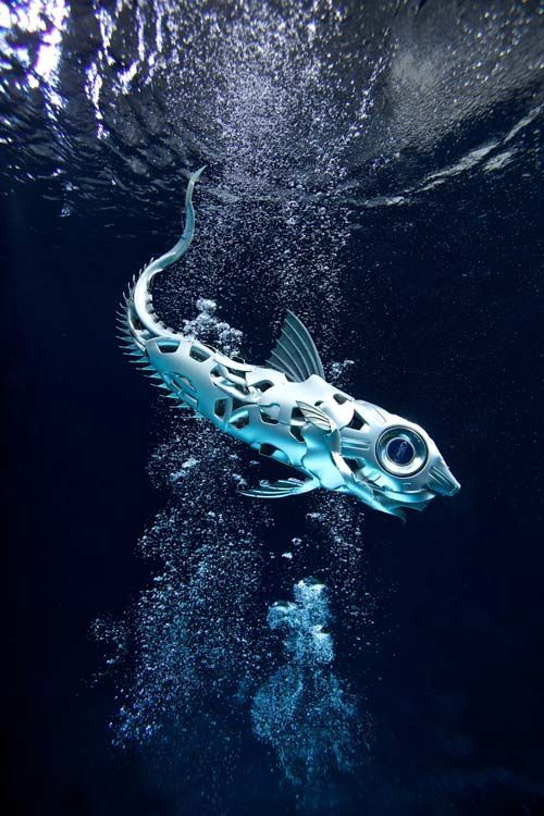 2. Here's a pic of my fish underwater at Pinewood studios. Fish are made from car hubcaps. Photo by Phoebe Rudonimo. Hubcap Creatures