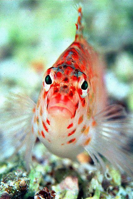 98aa900 Sea Fish Beautiful Fish Water Animals