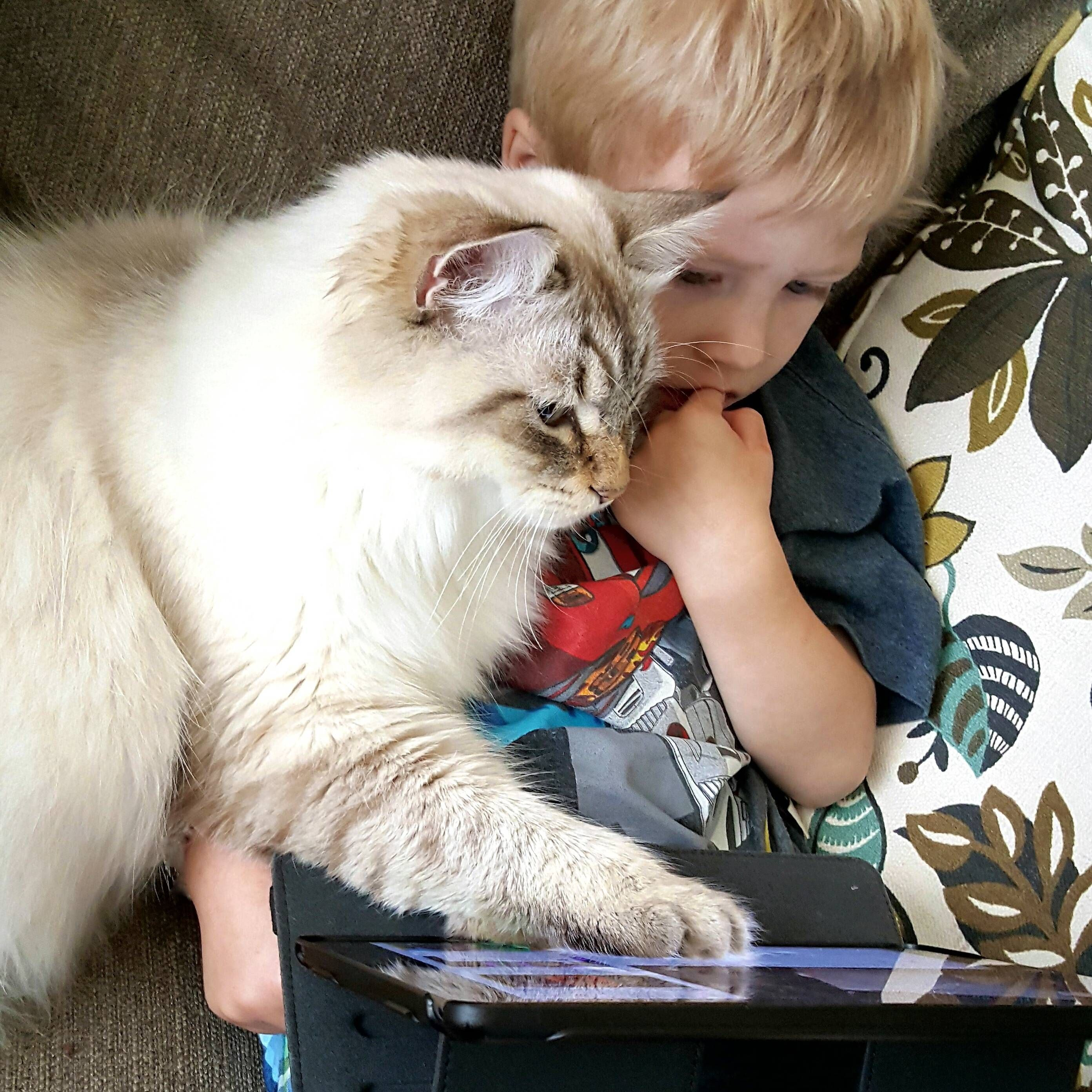 Watch little human. This is how you find cat pics on Reddit.