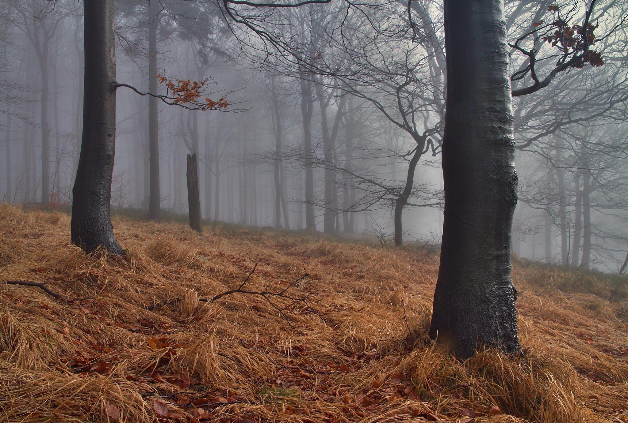 Fog and light II.