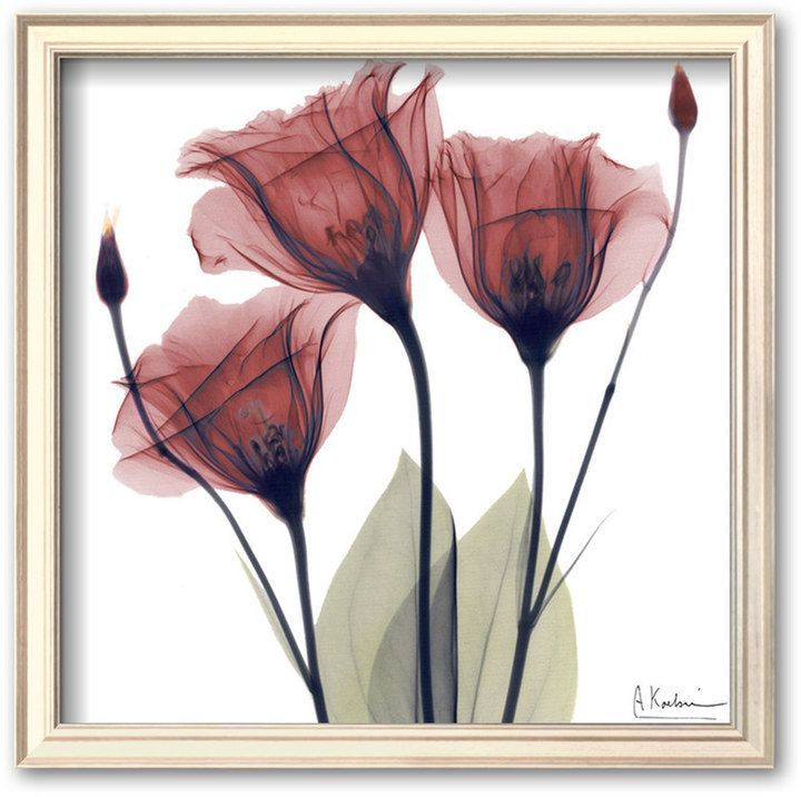 Art.com \'\'Gentian Trio in Red\'\' Framed Art Print by Albert Koetsier ...