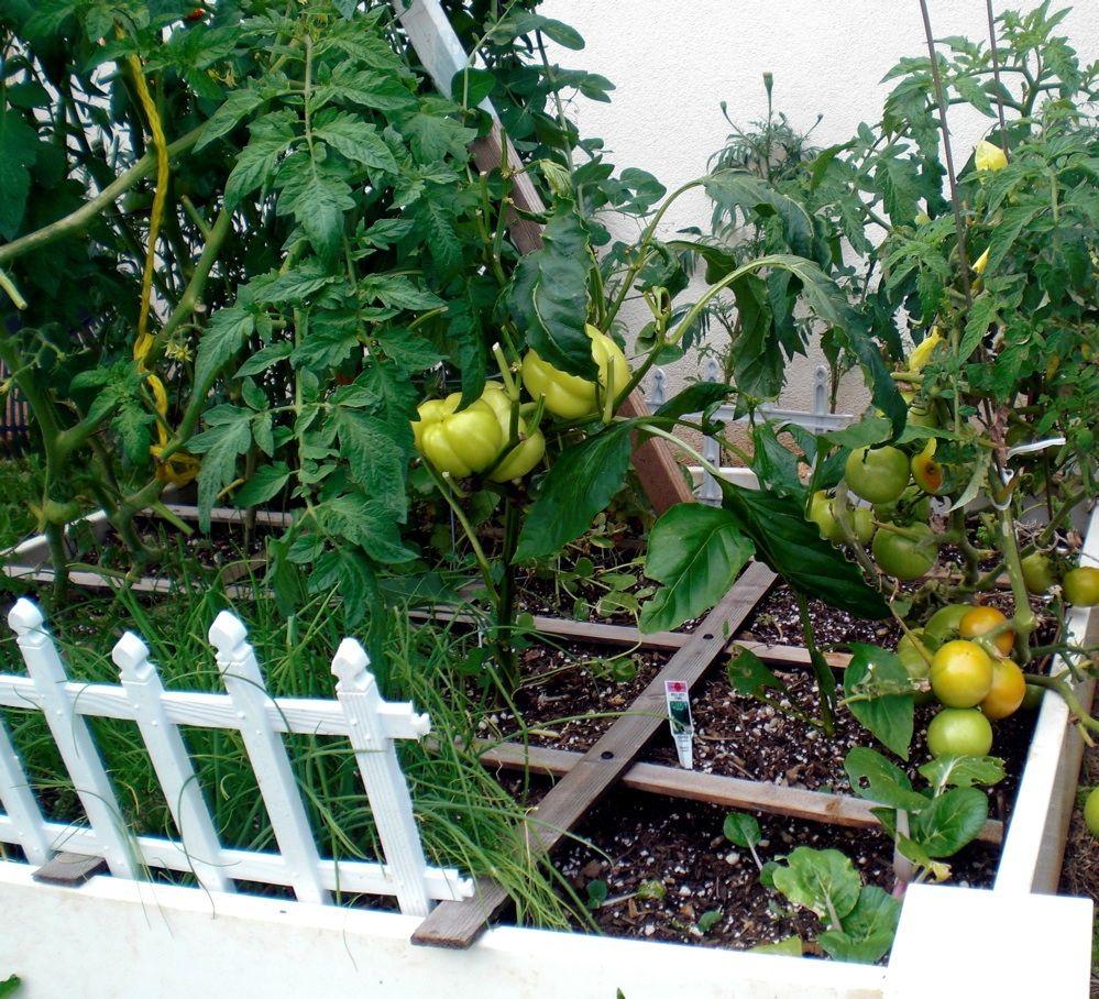 Charming Gardening Growing A Successful Square Foot Garden In Hawaii