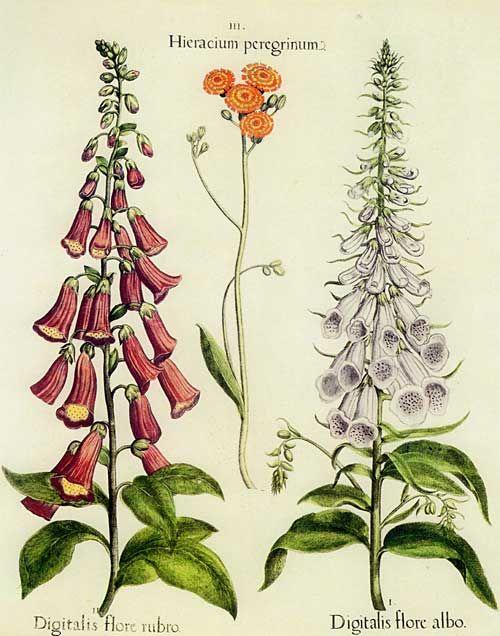 Pin by Stacy Mishina on Декупаж | Decoupage: Botanicals | Gravures de fleurs, Art, Herbier