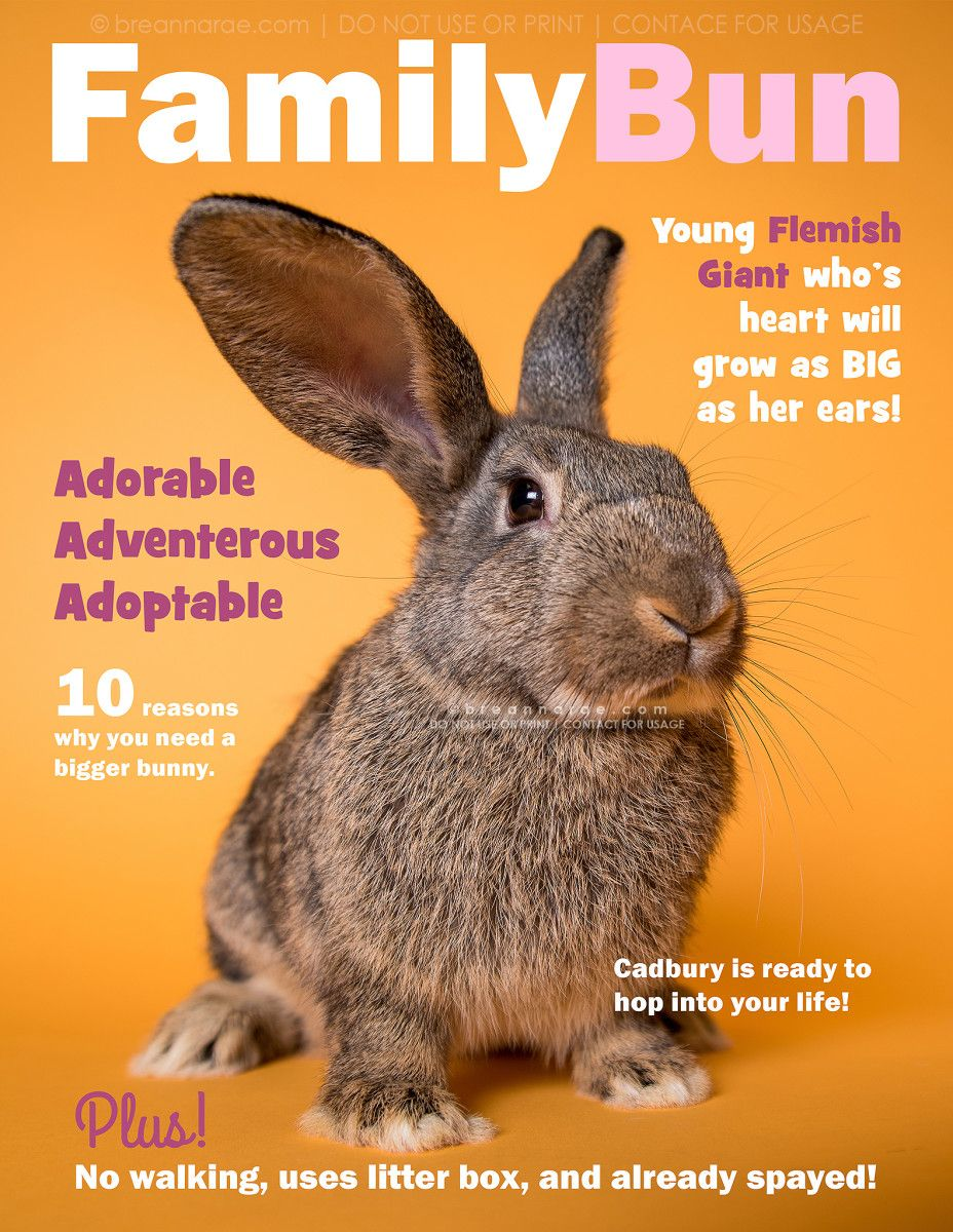 Magazine Cover Posters Breanna Rae Photography Design Pet Magazine Magazine Cover Pets