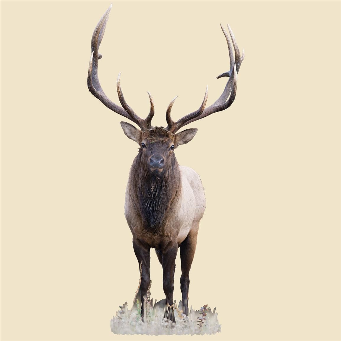Victorian Wildlife Elk Diagram - Online Schematic Diagram •