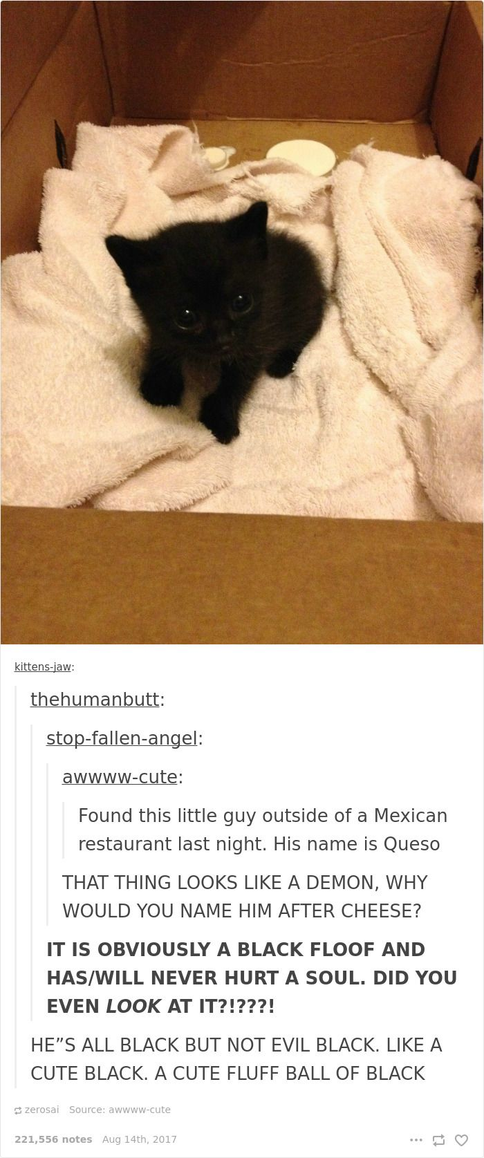 10 Posts On Tumblr About Cats That You Can T Resist Laughing At Funny Cat Pictures Cat Pics Cat Post