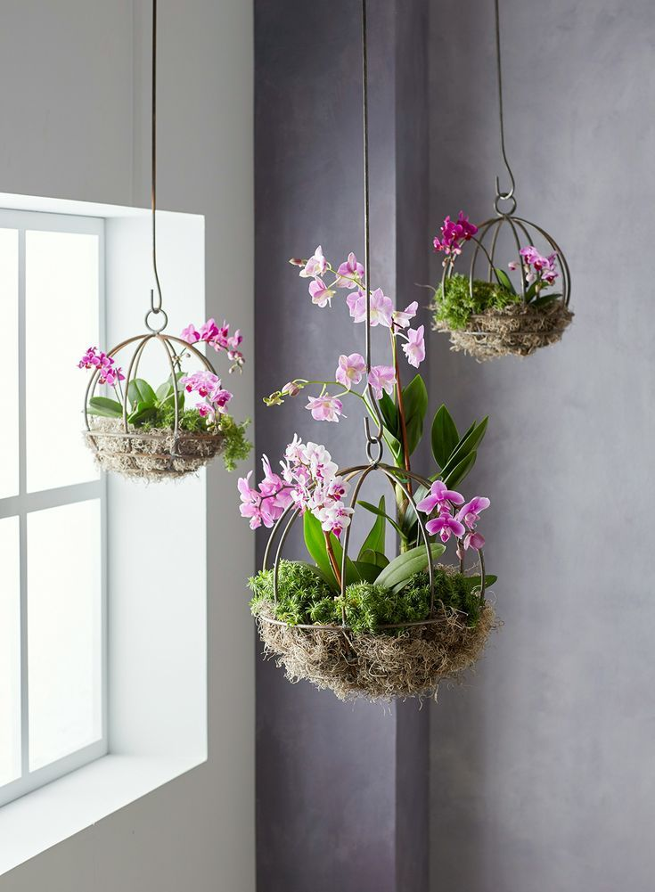 This Orchid Planter Project Will Be a Conversation Starter #hangingplantsindoor