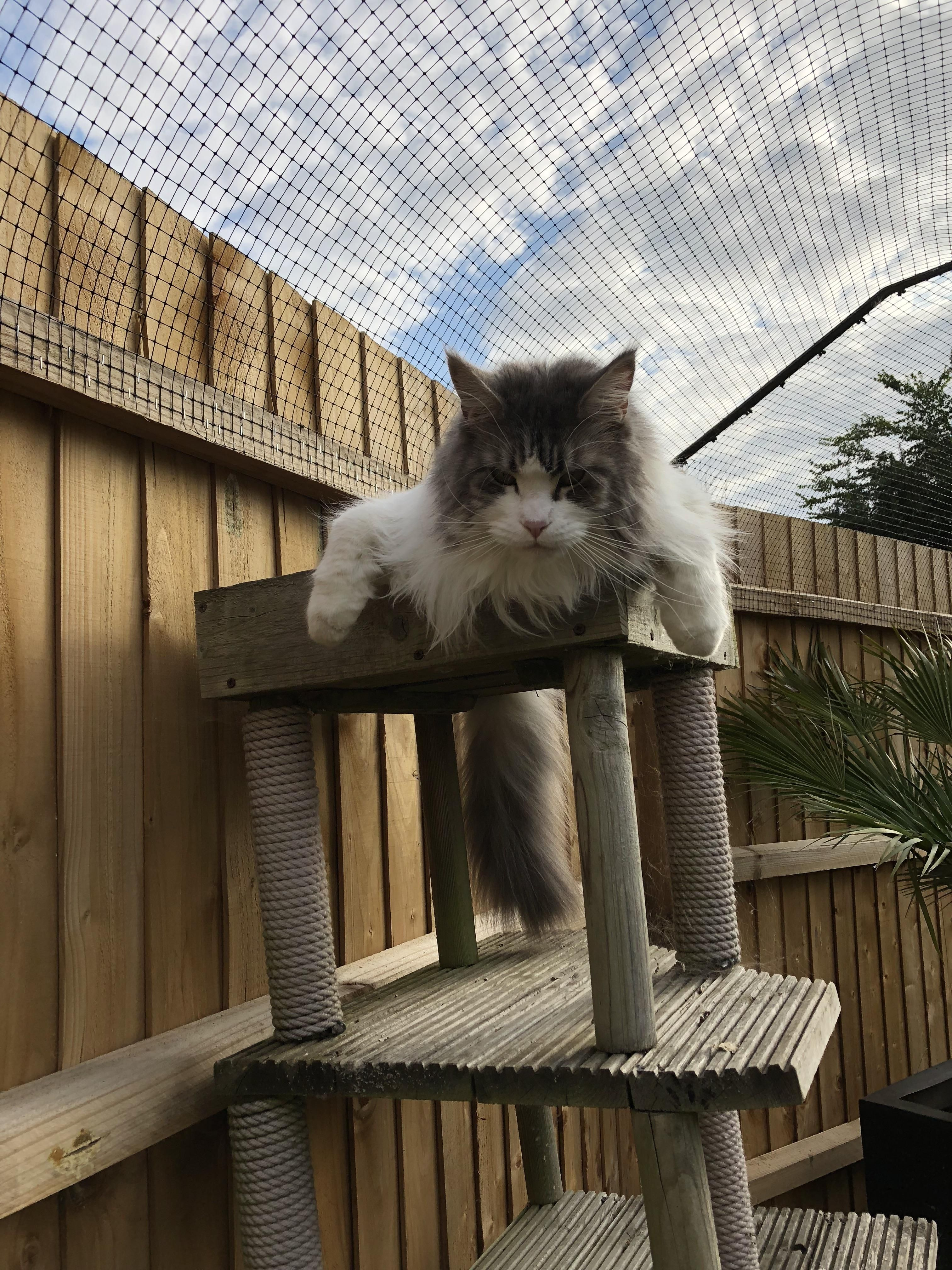 It S Far Too Hot To Do Anything But Snooze Cat Enclosure Outdoor Pet Enclosure Cat Fence