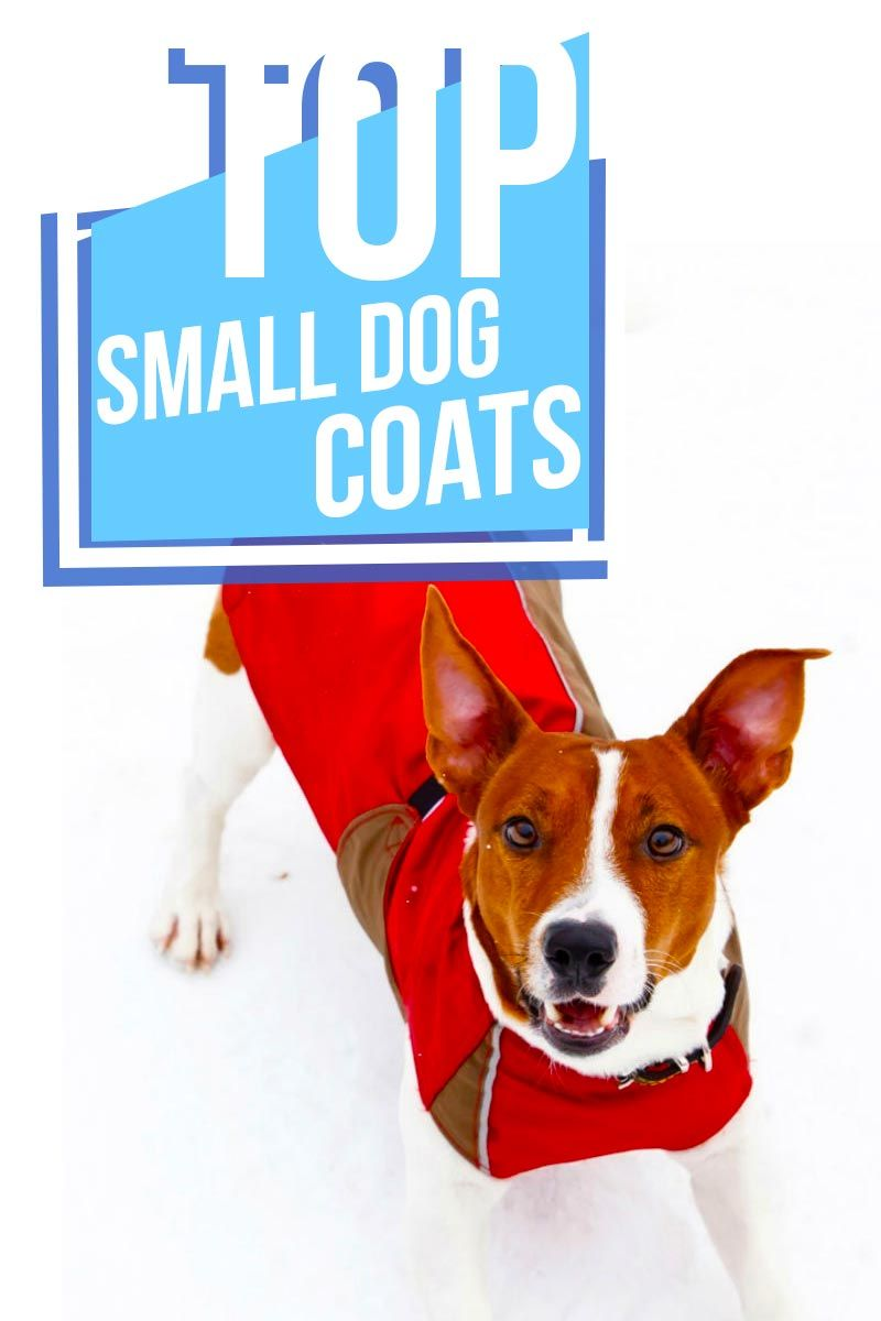 Small Dog Coats The Best Dressed Petite Pooches Small Dog Coats