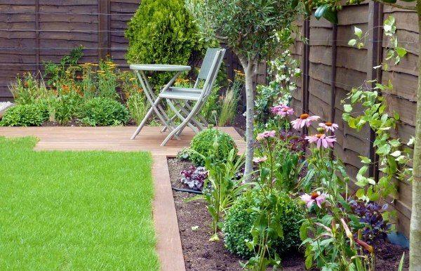 Kleinen Garten Blumenbeet Echinacea