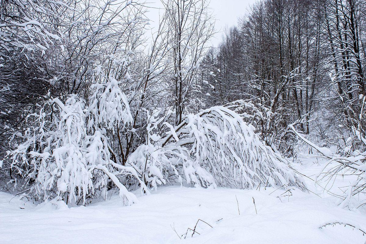Snow Tale.