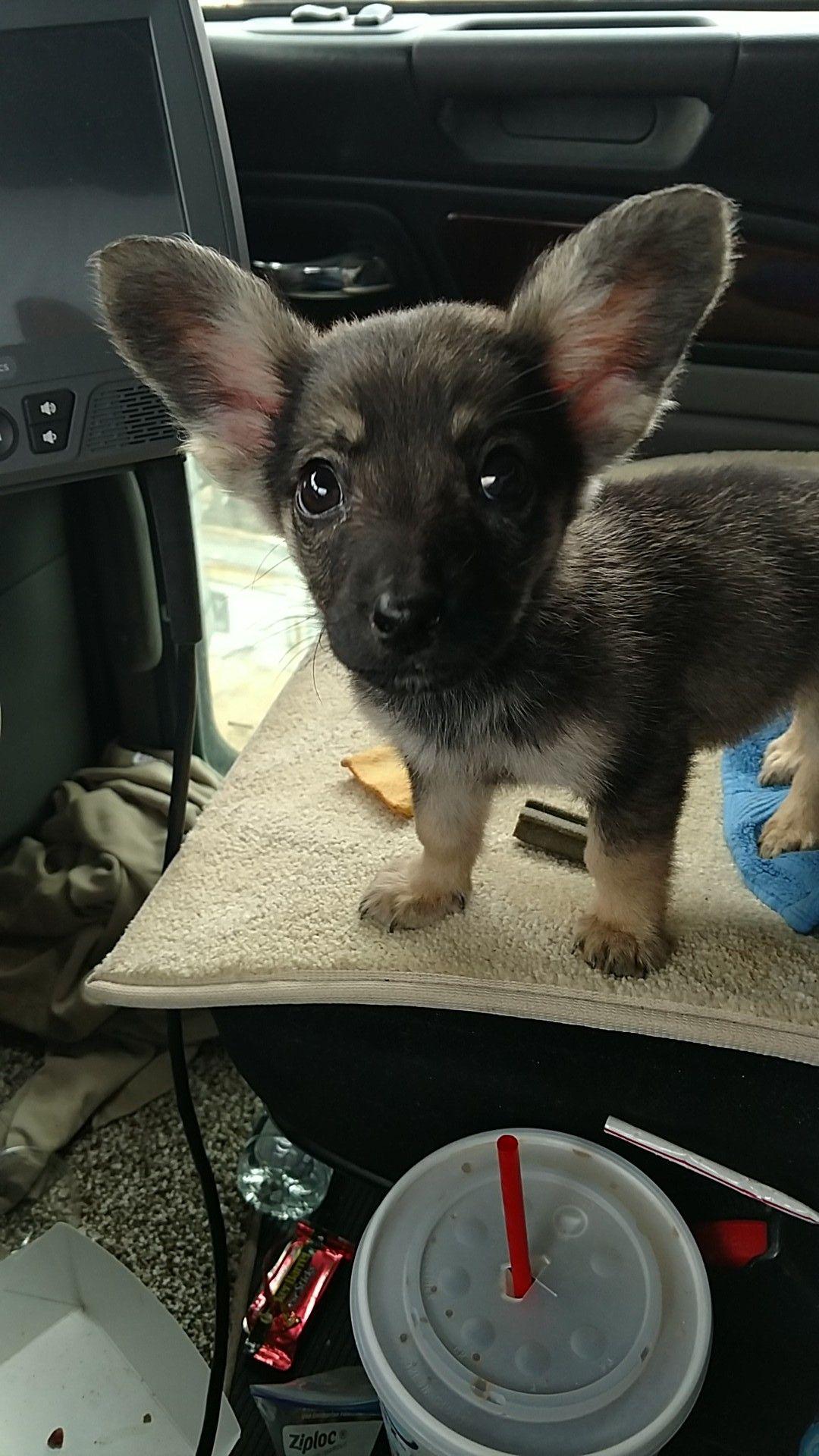 Puppy I Found In The Oilfields Of West Texas Named Him Dobby Via