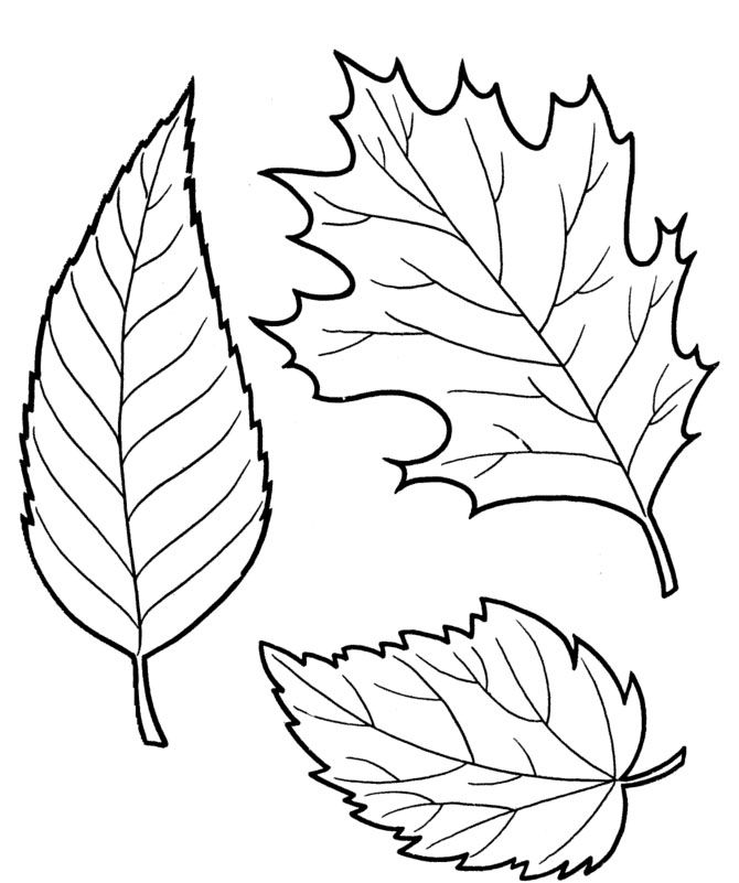 The Dry Leaves Coloring Pages