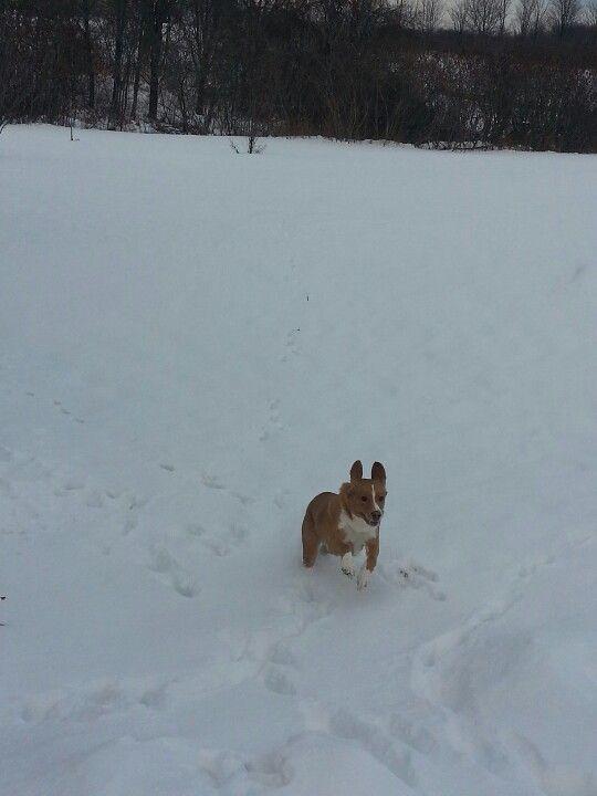 My dog loves the snow. Haha