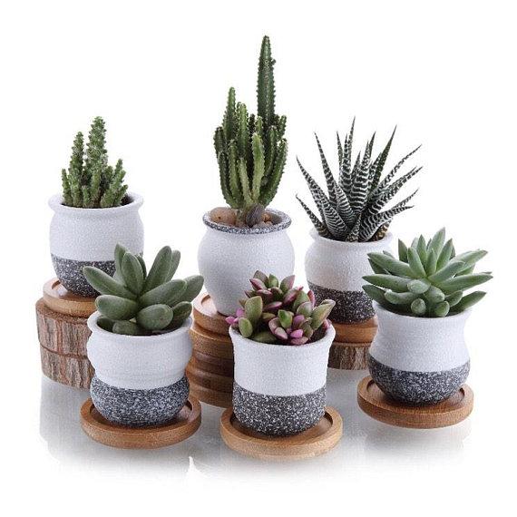 Miniature Planter Ceramic Planter Succulent Pots Cactus Etsy Cactus Plant Pots Flower Pots Small Succulent Plants