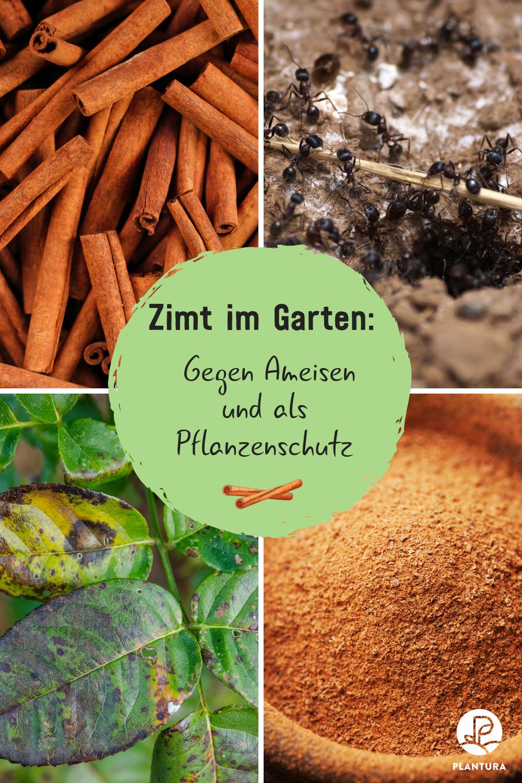 Zimt Im Garten Ein Sinnvoller Pflanzenschutz Plantura Pflanzenschutz Ameisen Im Garten Schadlinge Im Garten