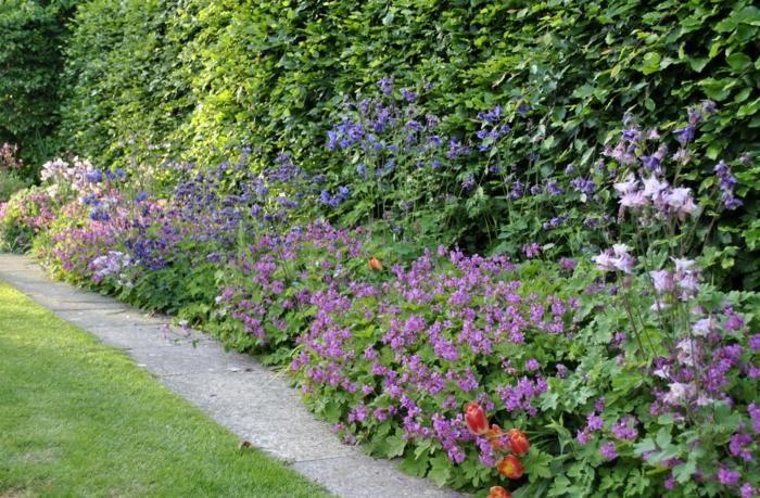 bunte schatten pflanzen im garten vor einer hecke | garten, Garten und Bauten