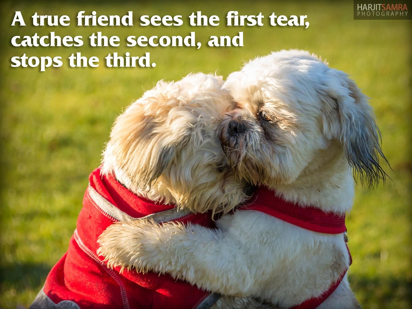 A true friend sees the first tear, catches the second and