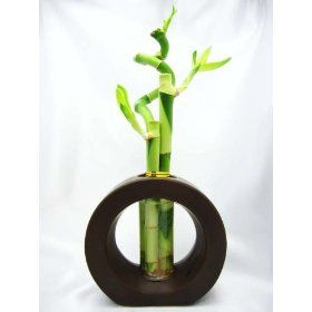 9GreenBox - Live Spiral 3 Style Lucky Bamboo Plant Arrangement with Ceramic Vase Brown,$13.99