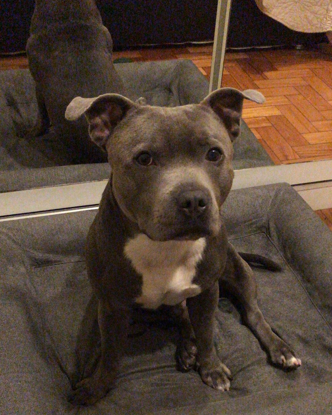 14 Facts About Staffordshire Bull Terriers