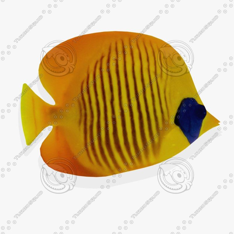 3Ds Wall Tropical Fish Fg - 3D Model