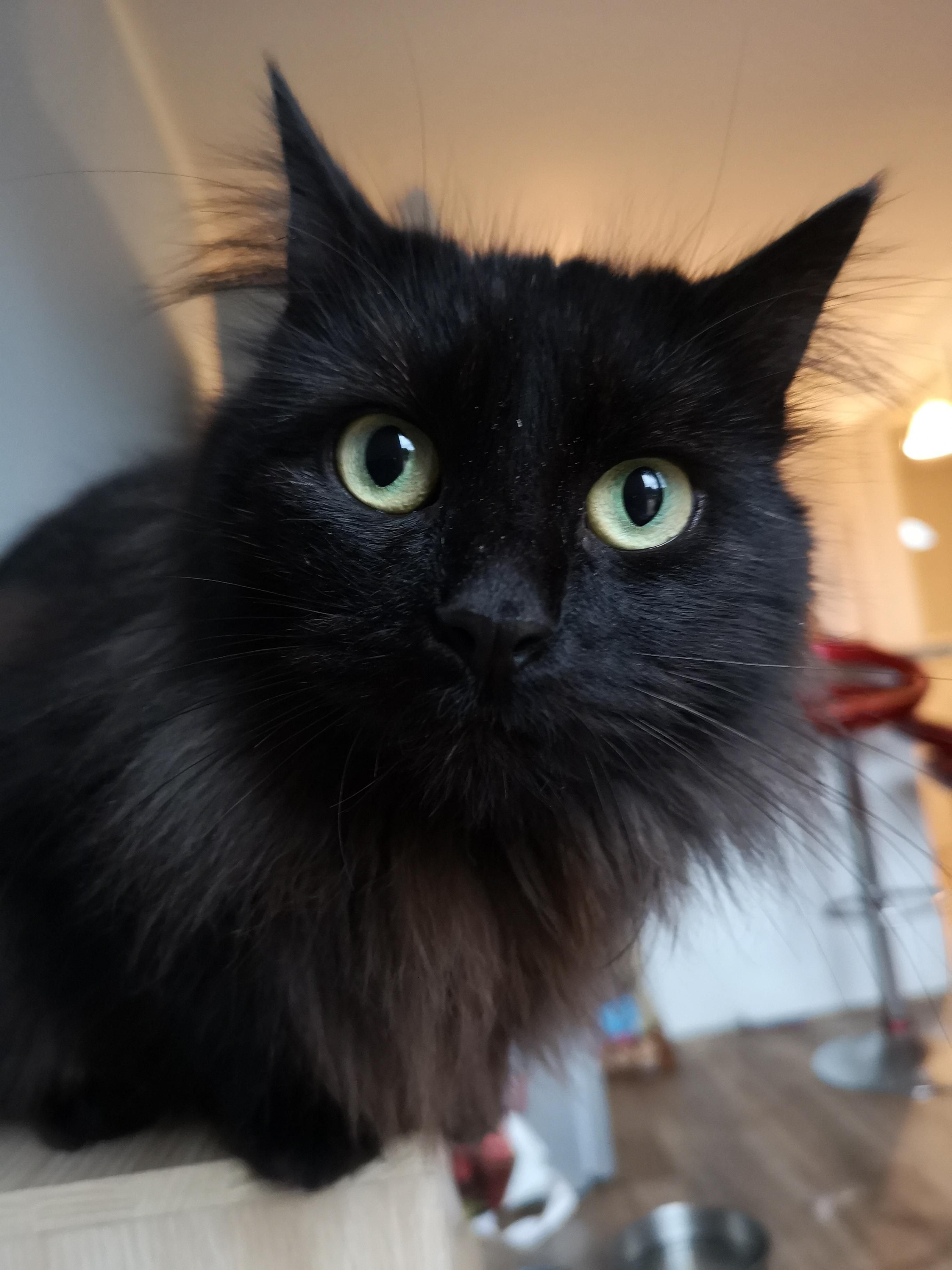 Look into my eyes reddit! Pretty cats, Cats and kittens