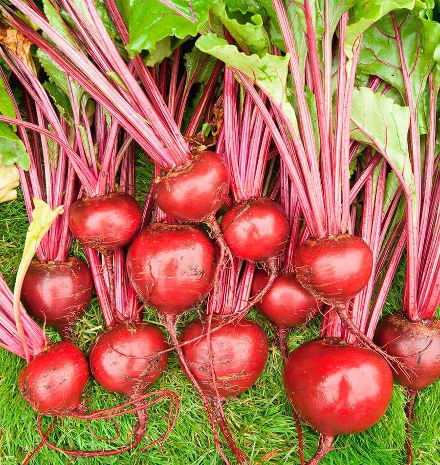 Merlin Organic Beet Seeds Are Certified Organic Untreated 400 x 300