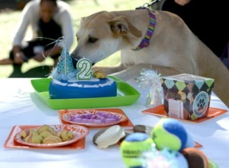 Let Unleashed By Petco Host Your Pet Party Order With Us And Receive A Delicious Organic Cake Wet Noses