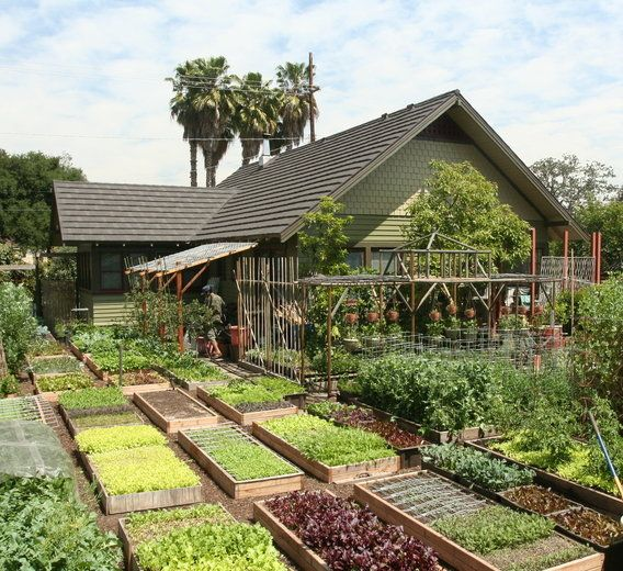 15 Tiny Outdoor Garden Ideas For The Urban Dweller: Meet The Family Growing 6,000 Pounds Of Food A Year In