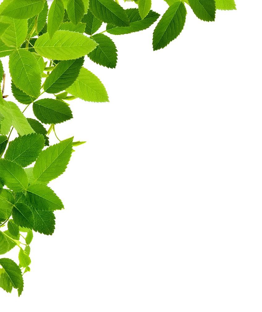 Free Download Leaves Left Corner Transparent Png Image Leaves Png Images Desktop Background Pictures