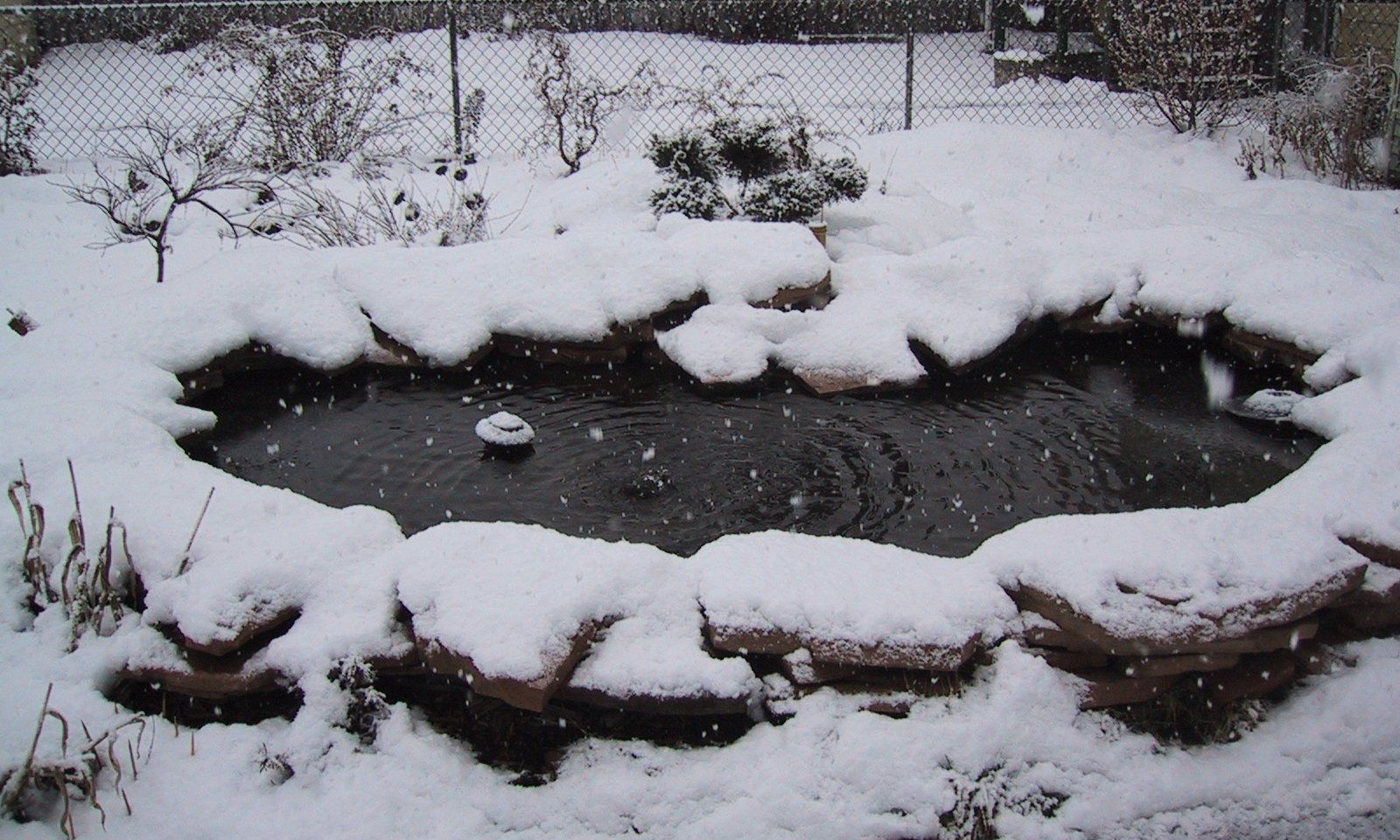 Fish pond covered in snow ponds water gardens in for Koi pond temperature winter