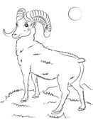 Mountain Bighorn Sheep Coloring page | (ABC) Coloring Pages ...