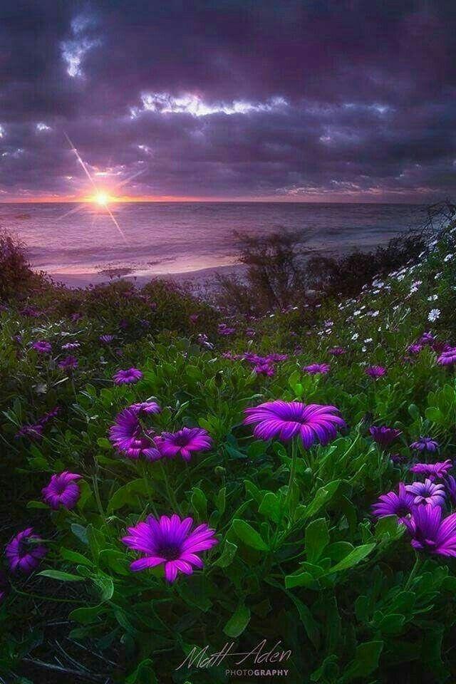 pin de auri♡ navarro en campo de flores | pinterest | campo de
