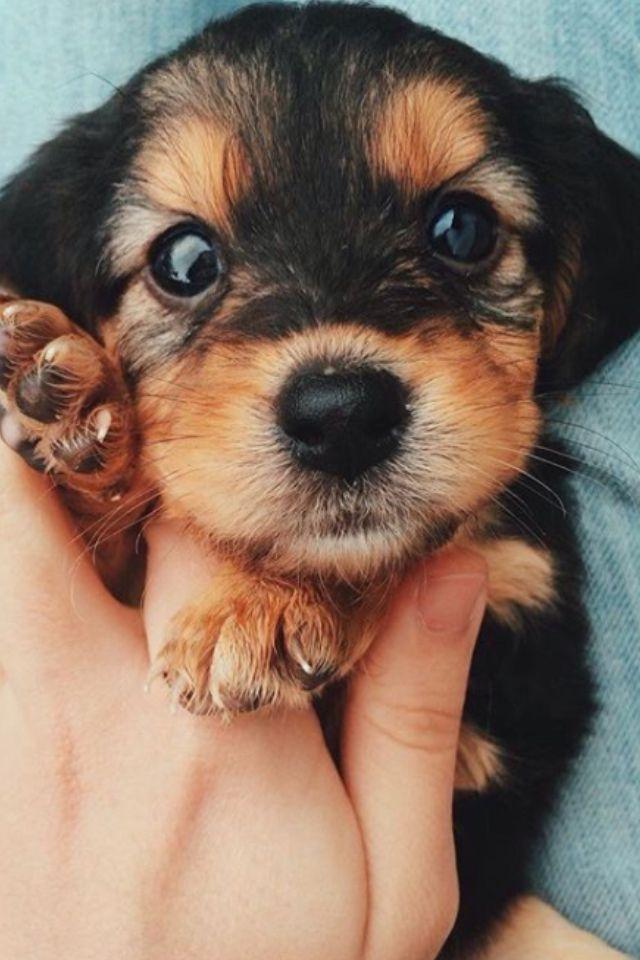 Lovey puppy