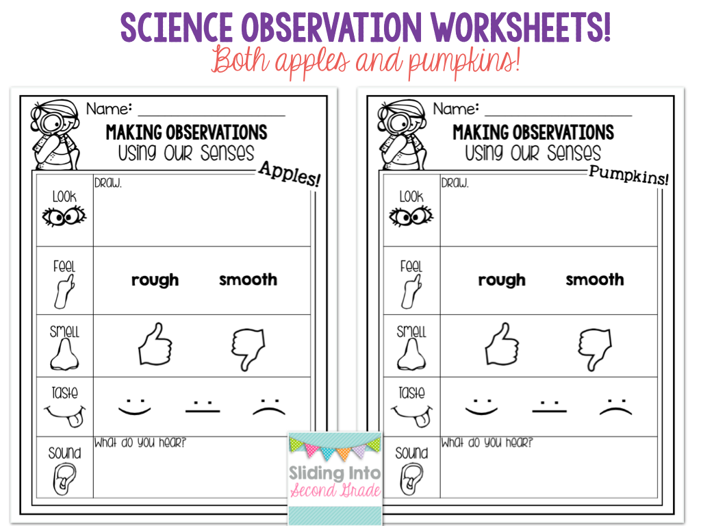 worksheet Observation Worksheet updated 5 senses packet apples and pumpkins observation forms using senses