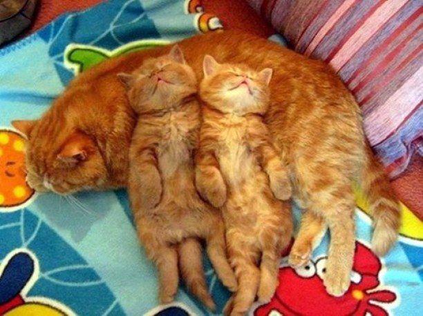 Mamas make the best pillows !