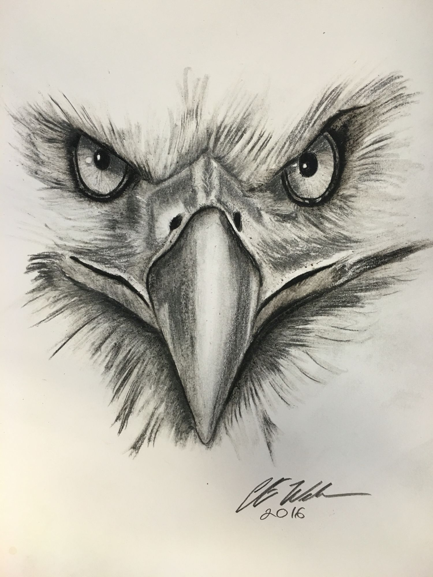 Bald Eagle Tattoo Designs Drawings