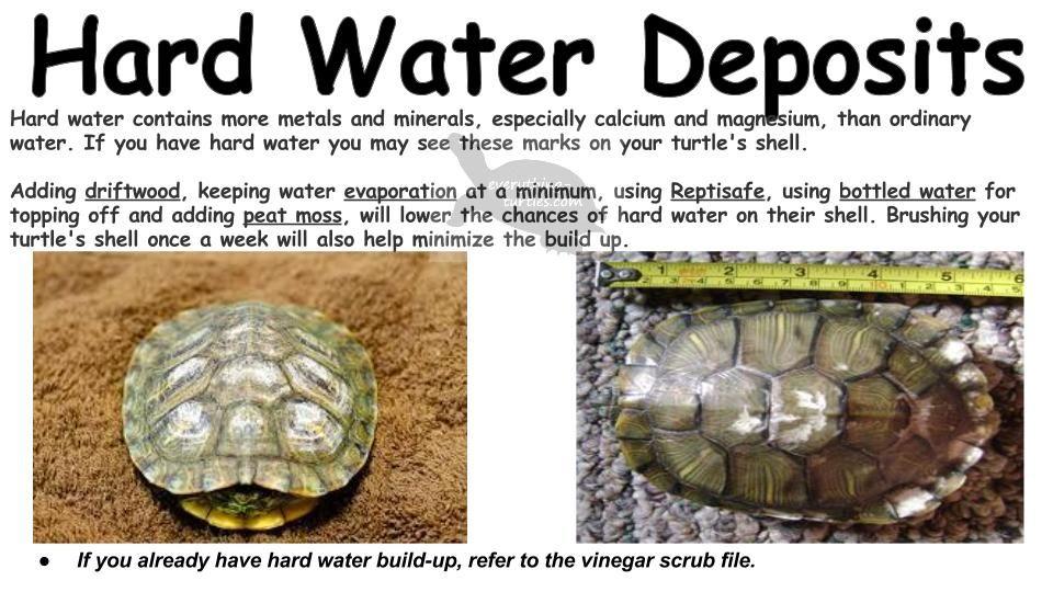 Pin by Cassandra Cagle Rainey on Turtle Fun! | Turtle, Animals