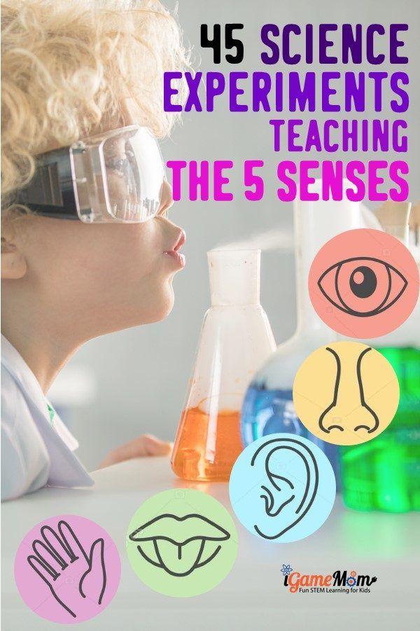 45 Science Activities for Kids to Learn the 5 Senses #scienceexperimentsforpreschoolers