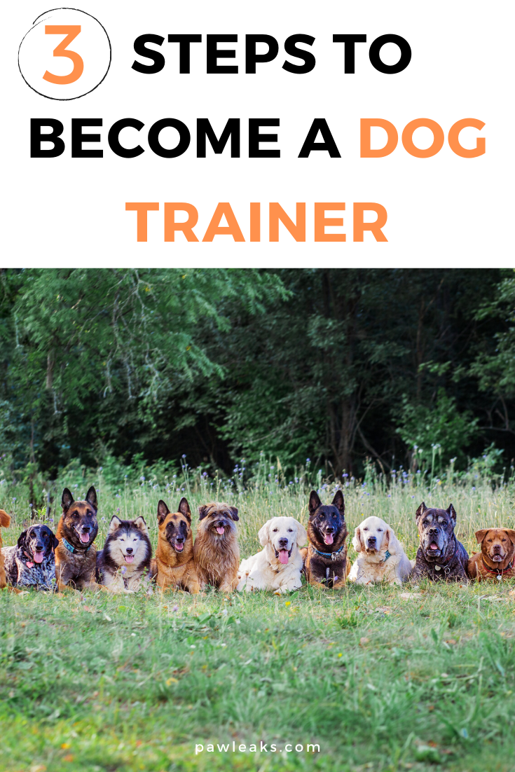 3 Steps To Become A Dog Trainer In 2020 Pawleaks Become A Dog Trainer Dog Trainer Dog Training