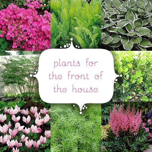 Front Garden Bushes: Plants For The Front Of The House