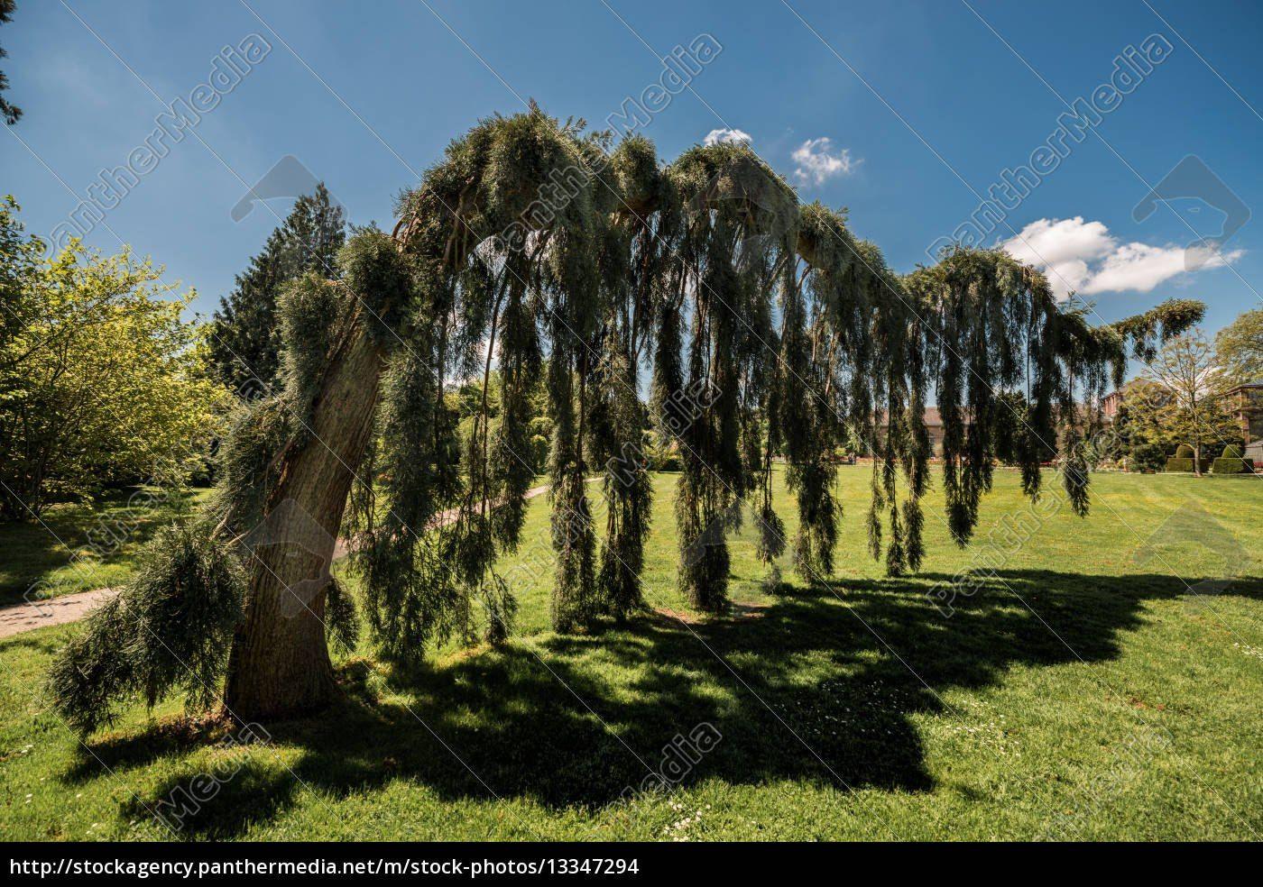 Baum Fur Garten Zuhause Image Ideas Mit Exotische Baume Fur Den Garten Alles Im Detail Von Exotische Baume Fur Den Garten Alles Im D Baume Garten Garten Baum