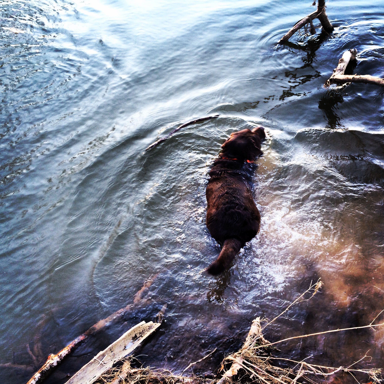 Lil waterdog