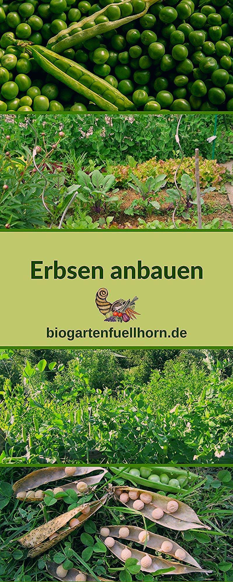 Photo of Gemüse Im Garten Anbauen