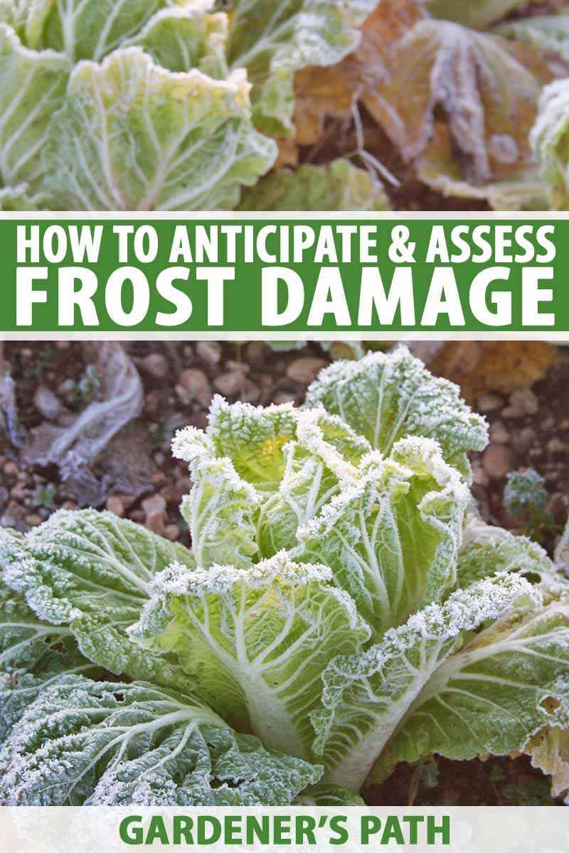 Frost Damage In The Fall Vegetable Garden Fall Garden 640 x 480