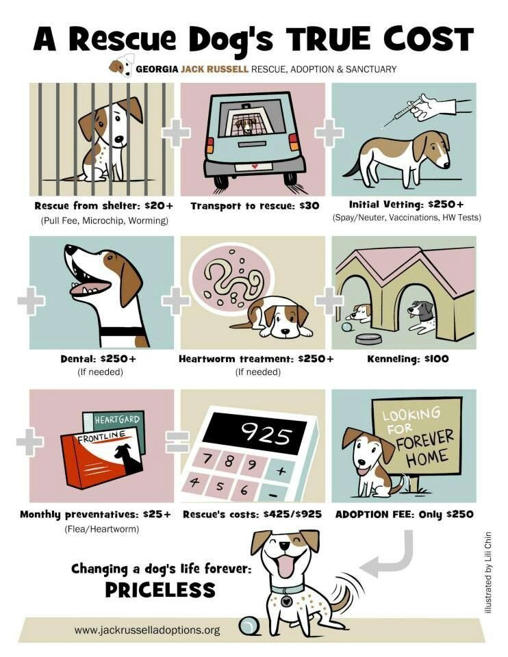 Some Of The Extra Costs Involved Although Not Nearly As High As Posted Here In This Illustration Should Be Considered When Ch Rescue Dogs Jack Russell Rescue
