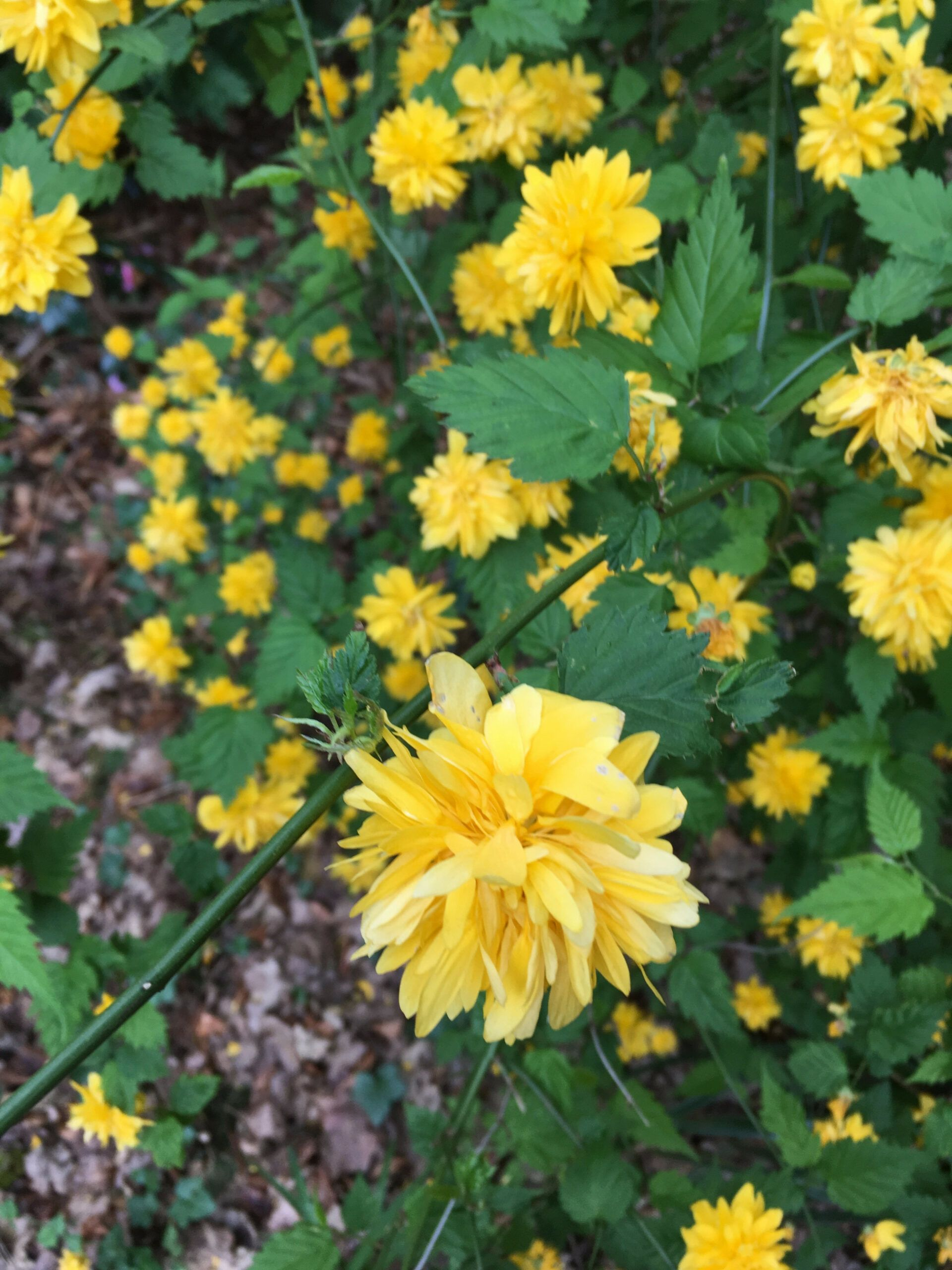 Ten Facts You Never Knew About Plant With Yellow Flowers