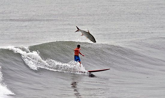 Surfer V/R snook or tarpon by Davidsdigits