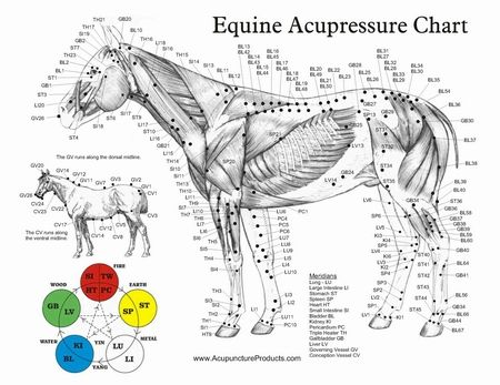 Free Printable Acupressure Points Chart 11 2 Sided Chart Equine Acupressure Acupuncture Points Horse Therapy